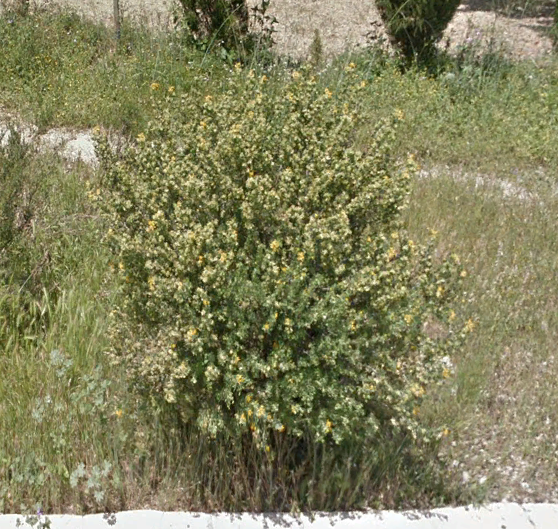 Identification fleurs jaunes Fleurs10