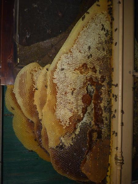 Récupération d'un gros essaim derrière un volet P1190519