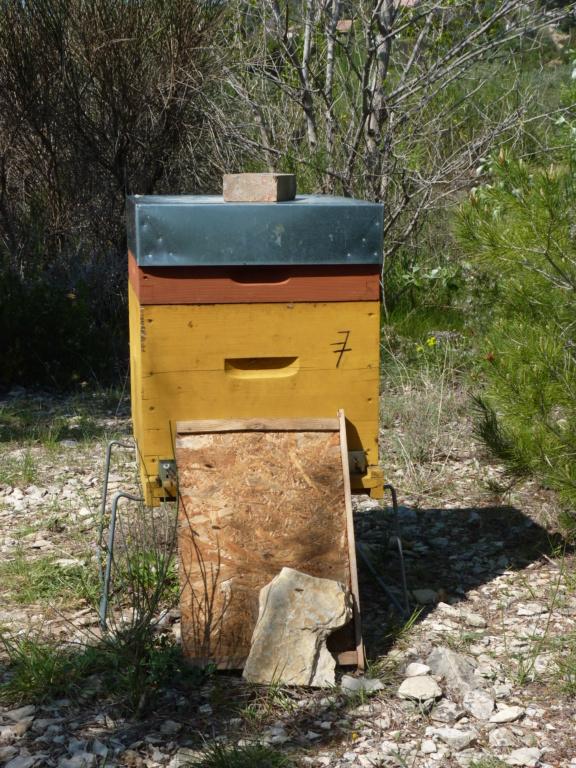 Disperser et réunir une ruche oprheline P1190819