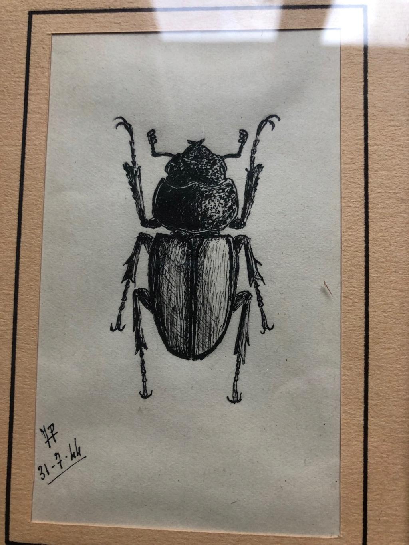 dessins originaux de lucaenidae Img_1714