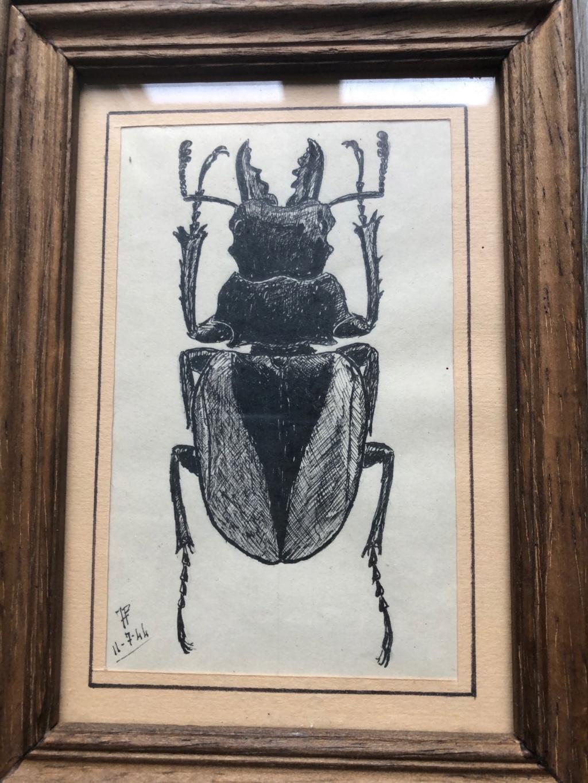 dessins originaux de lucaenidae Img_1716