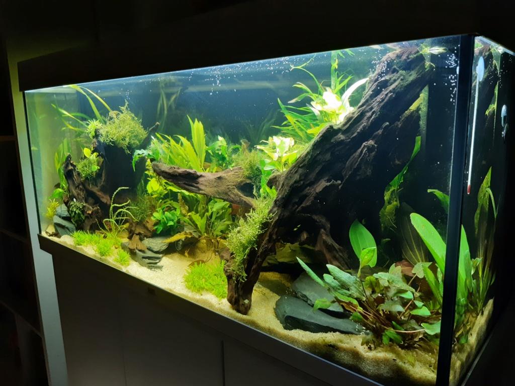 Aquarium 240l pour population type amazonien  20191211