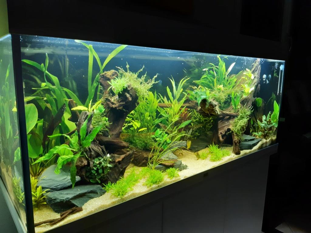Aquarium 240l pour population type amazonien  20191212