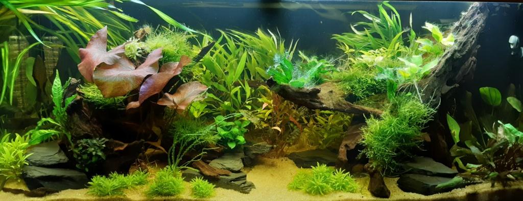 Aquarium 240l pour population type amazonien  - Page 2 20200113
