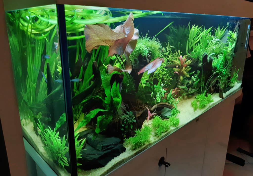 Aquarium 240l pour population type amazonien  - Page 2 20200177