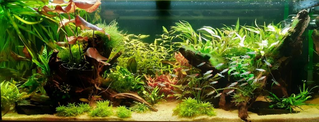 Aquarium 240l pour population type amazonien  - Page 2 20200186