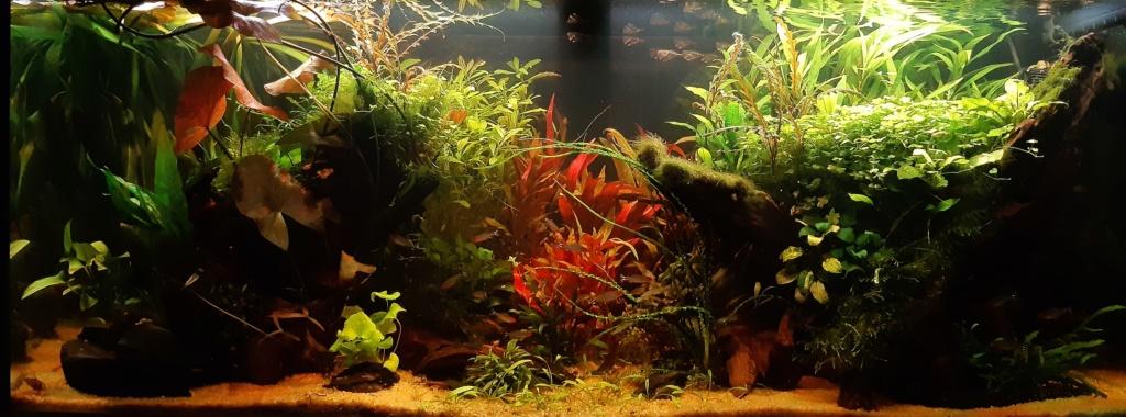 Aquarium 240l pour population type amazonien  - Page 3 20200314