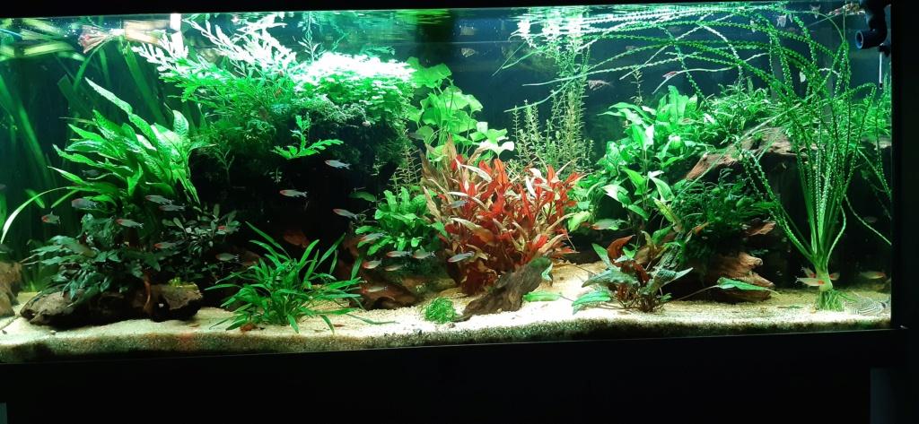 Aquarium 240l pour population type amazonien  - Page 3 20200843