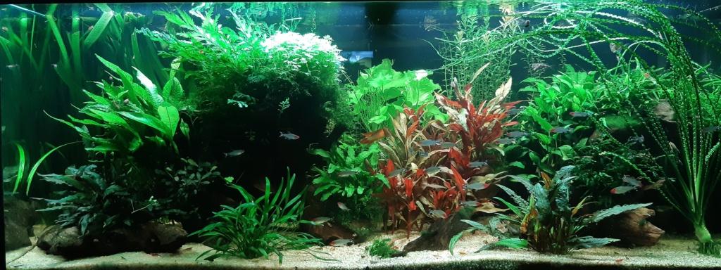 Aquarium 240l pour population type amazonien  20200945