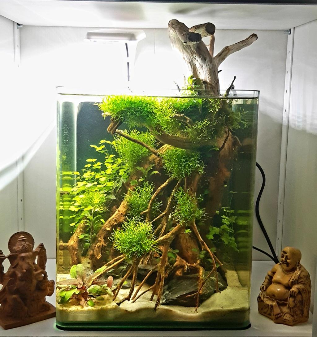 Aquarium 240l pour population type amazonien  - Page 3 20200947
