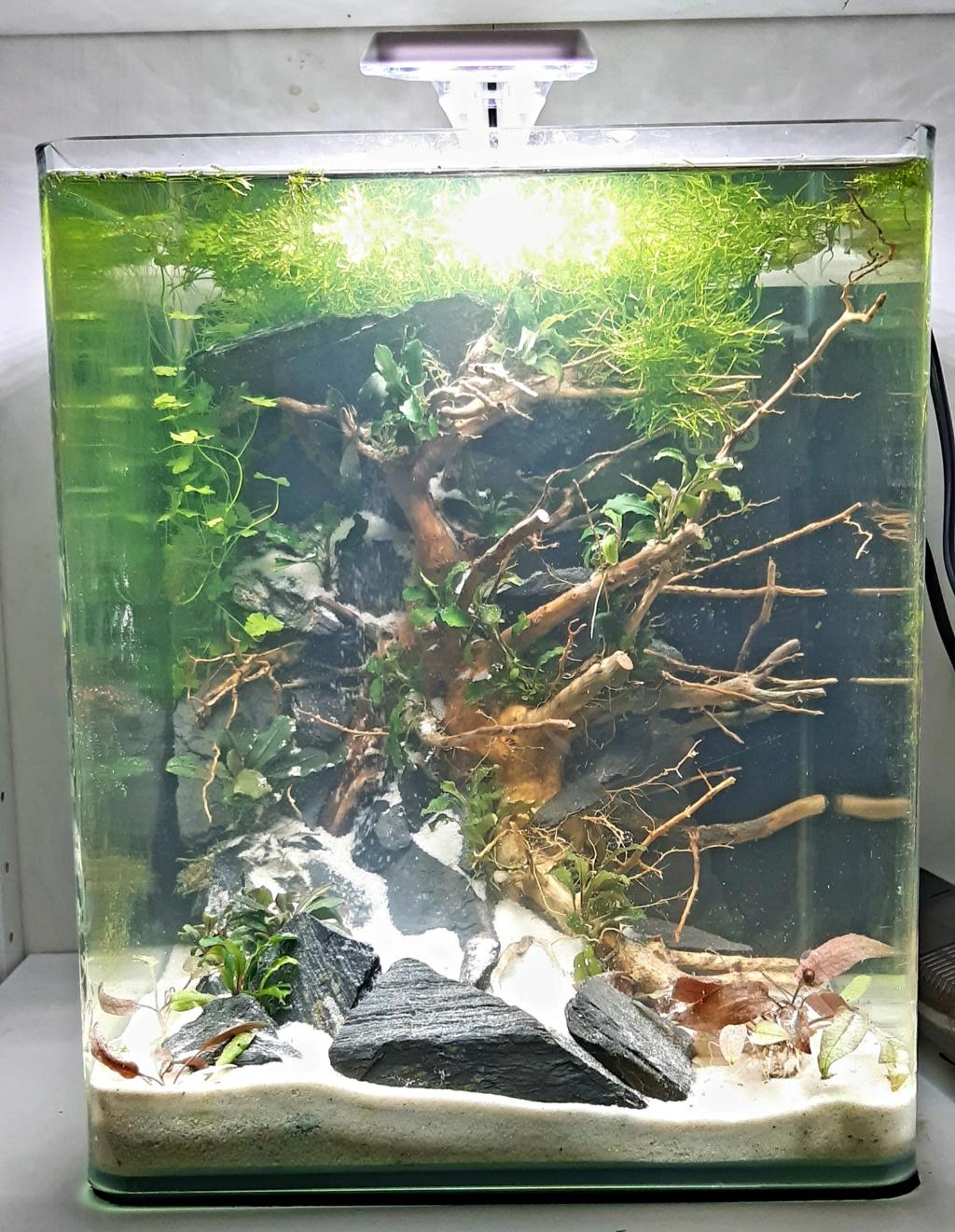 Aquarium 240l pour population type amazonien  - Page 4 20201012