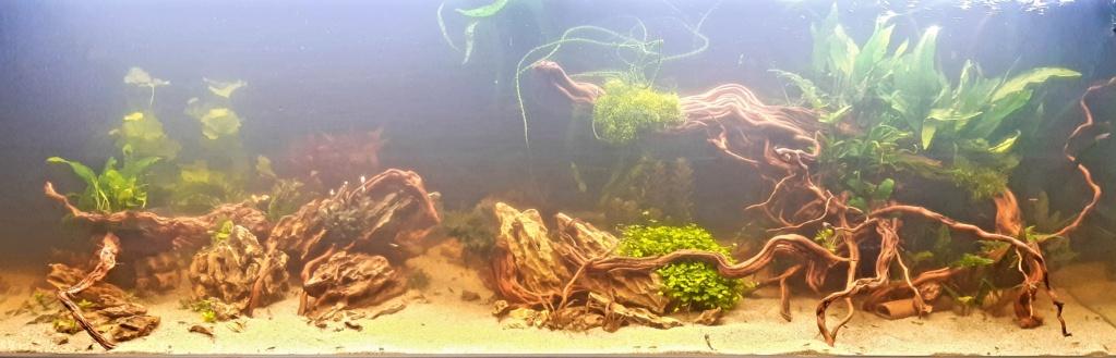 Aquarium 240l pour population type amazonien  - Page 5 20201119