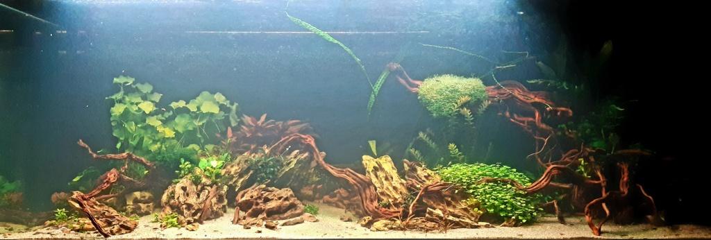Aquarium de ludovic 840 litres  20201150