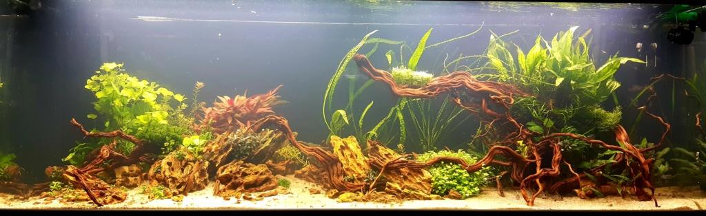 Aquarium de ludovic 840 litres  20201152