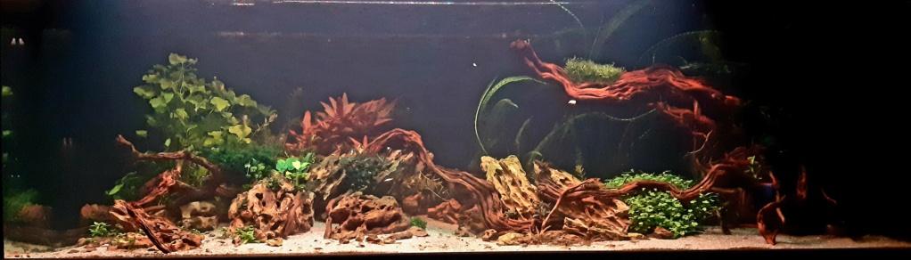 Aquarium de ludovic 840 litres  - Page 2 20201154