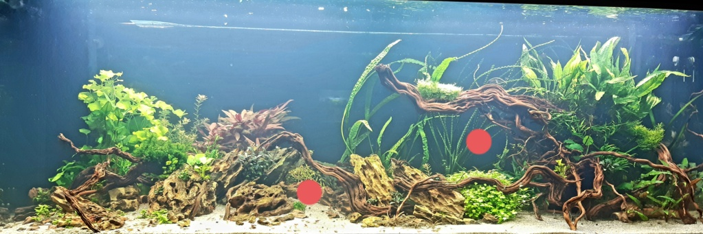 Aquarium de ludovic 840 litres  - Page 2 20201155