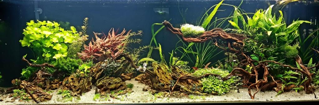 Aquarium de ludovic 840 litres  - Page 2 20201163