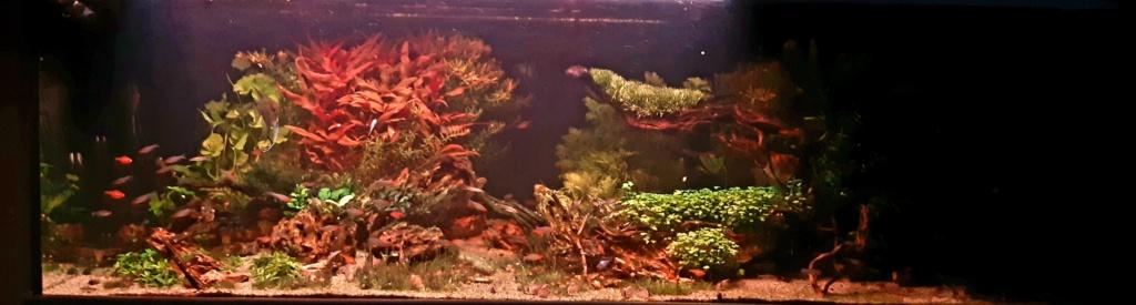 Aquarium de ludovic 840 litres  - Page 4 20201244