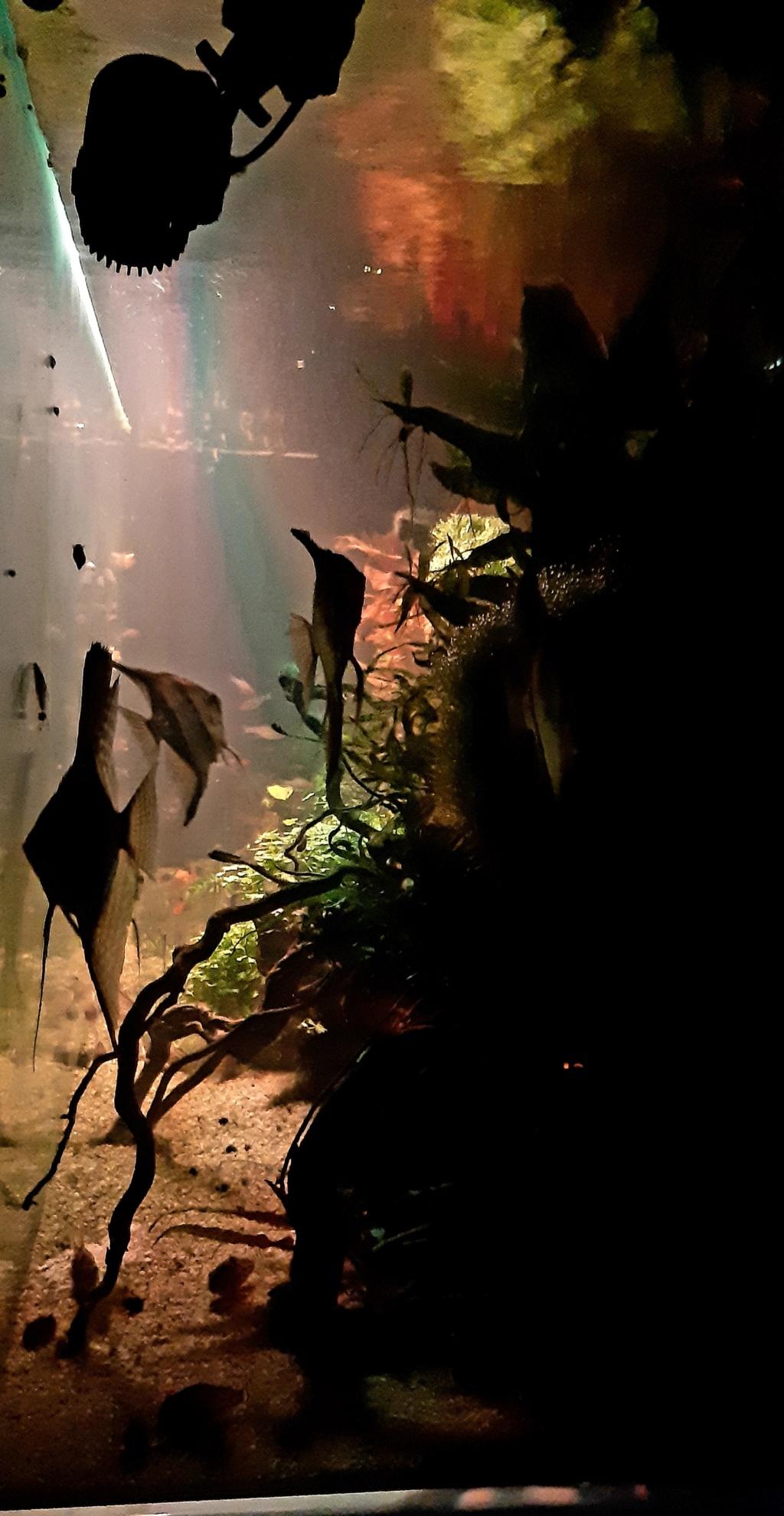 Aquarium de ludovic 840 litres  - Page 4 20201245