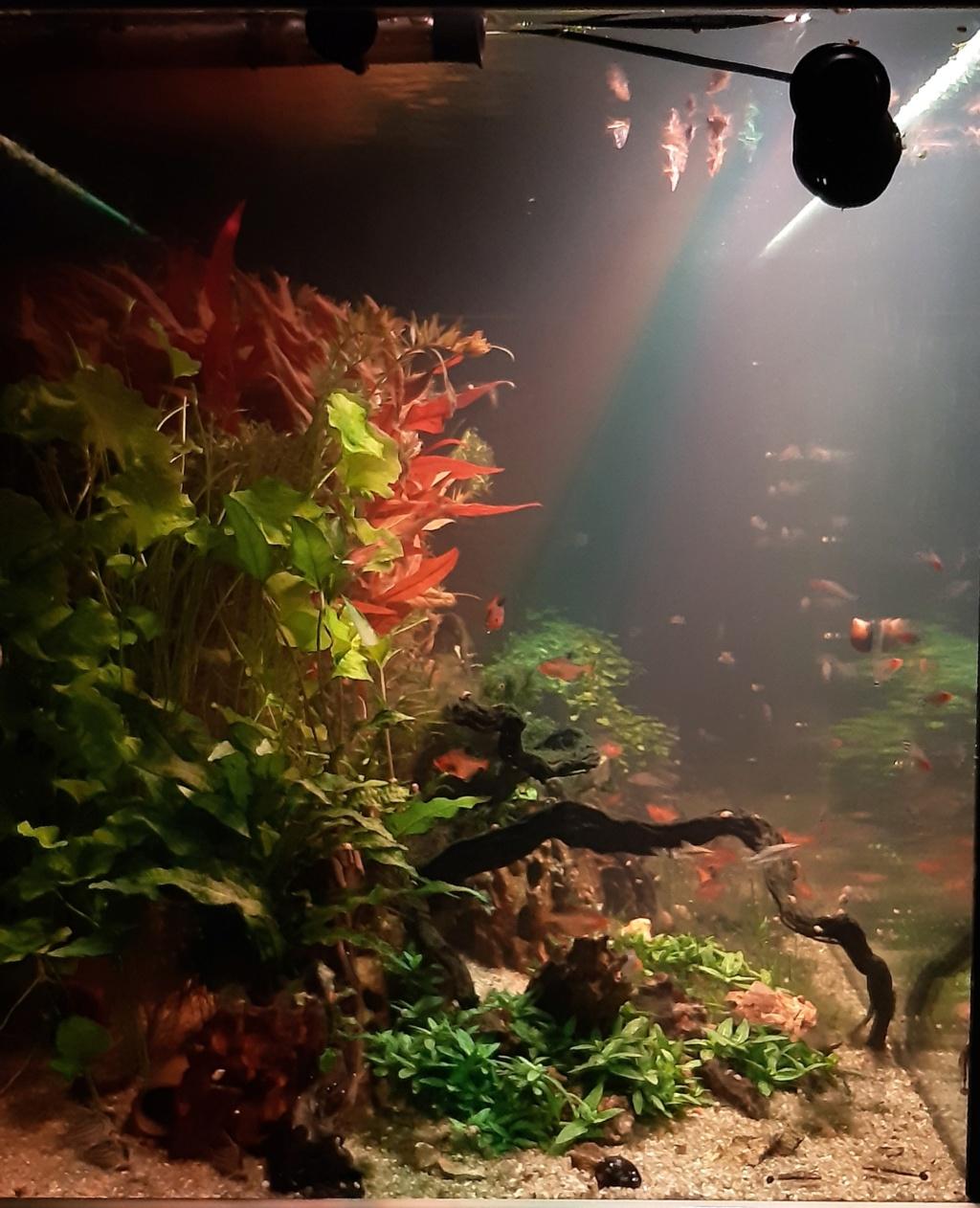 Aquarium de ludovic 840 litres  - Page 4 20201246