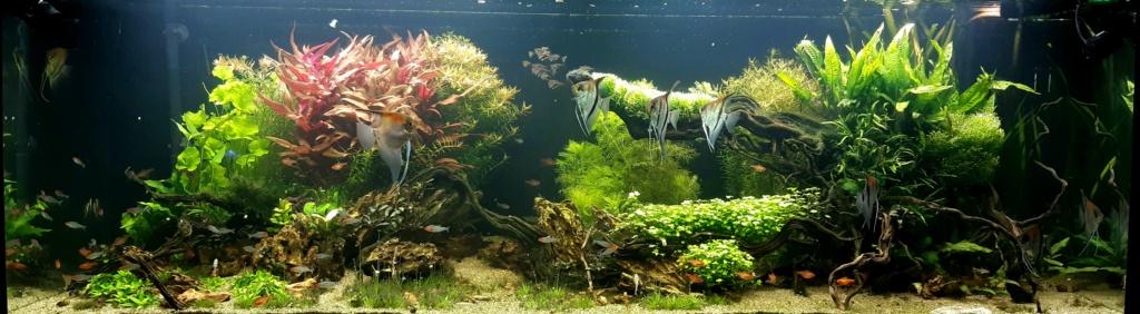 Aquarium de ludovic 840 litres  20201247