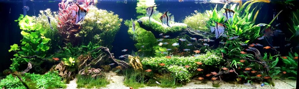 Aquarium de ludovic 840 litres  - Page 5 20210128
