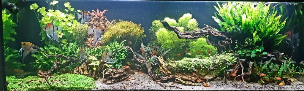Aquarium de ludovic 840 litres  - Page 5 20210711