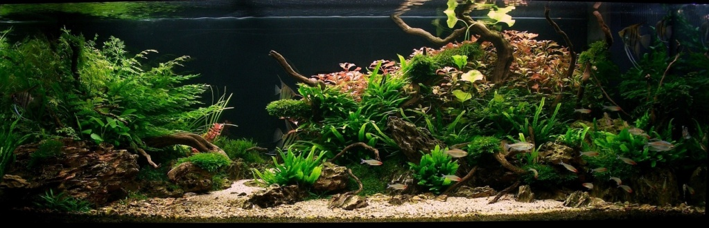 Aquarium 240l pour population type amazonien  - Page 3 Cimg6010