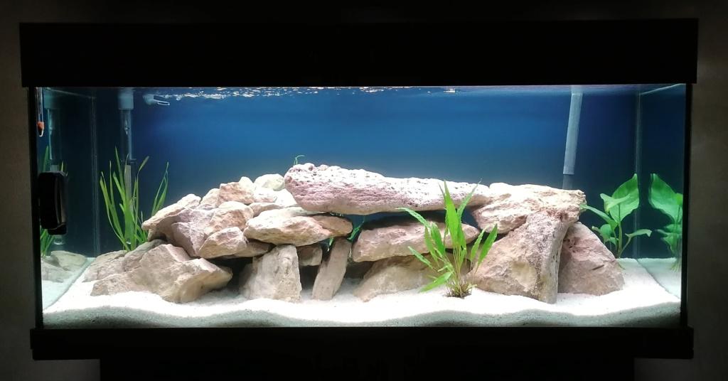 Projet Aquarium 240 litres Mbunas 115