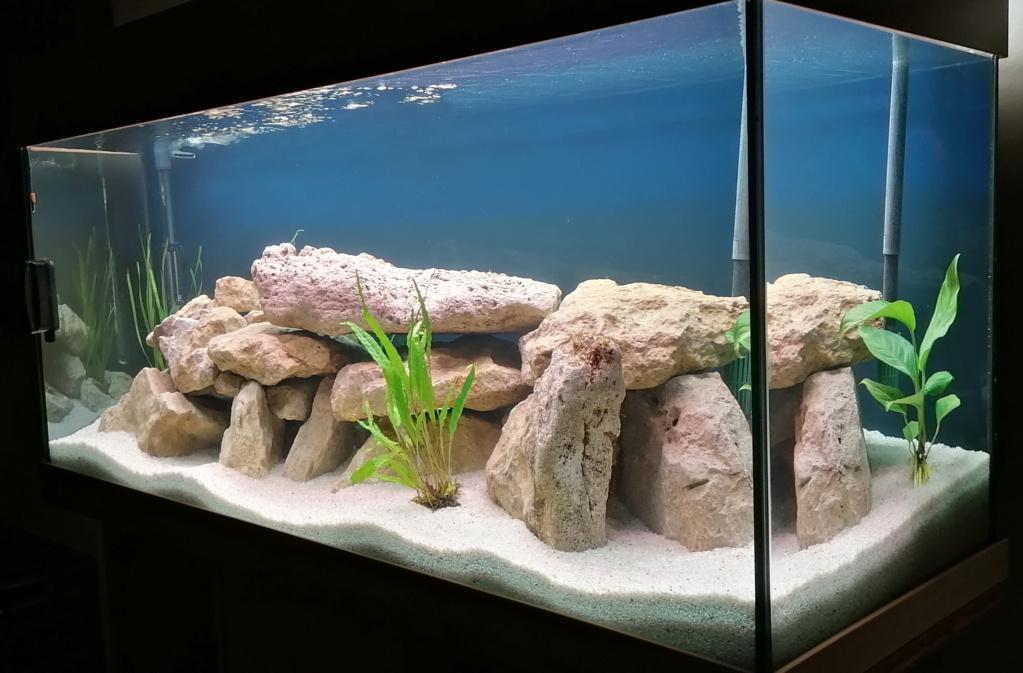 Projet Aquarium 240 litres Mbunas 311