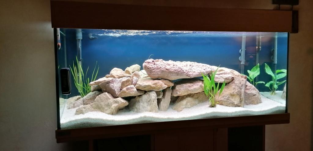 Projet Aquarium 240 litres Mbunas Img_2013