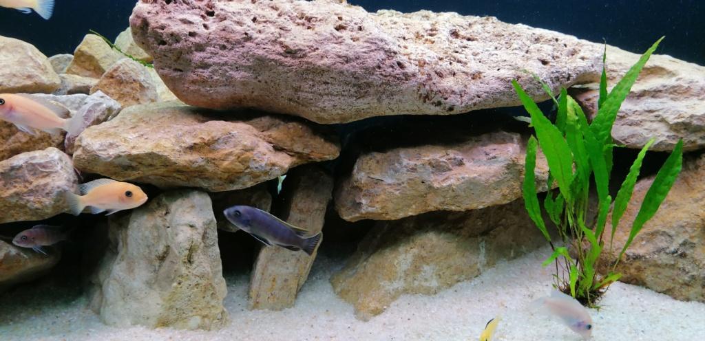 Projet Aquarium 240 litres Mbunas Img_2035