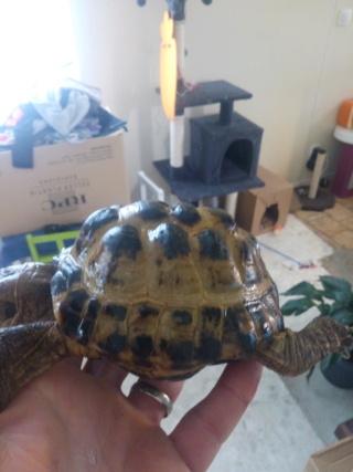 Présentation tortue des steppes  Img_2027