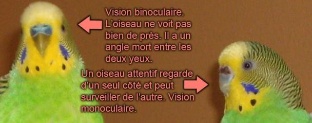 Apprivoisement 101 (2.0) 2012-010