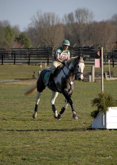 CARAÏBE  DREAM HORSE Gris711