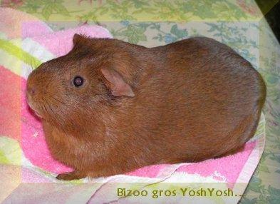 mon petit Yoshi Adieuy10