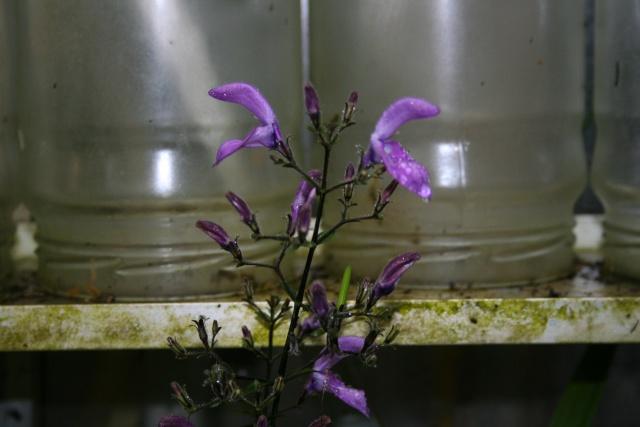 Jolies fleurs variées Brilla10