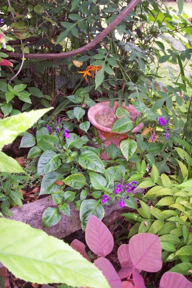Jolies fleurs variées Brilla11