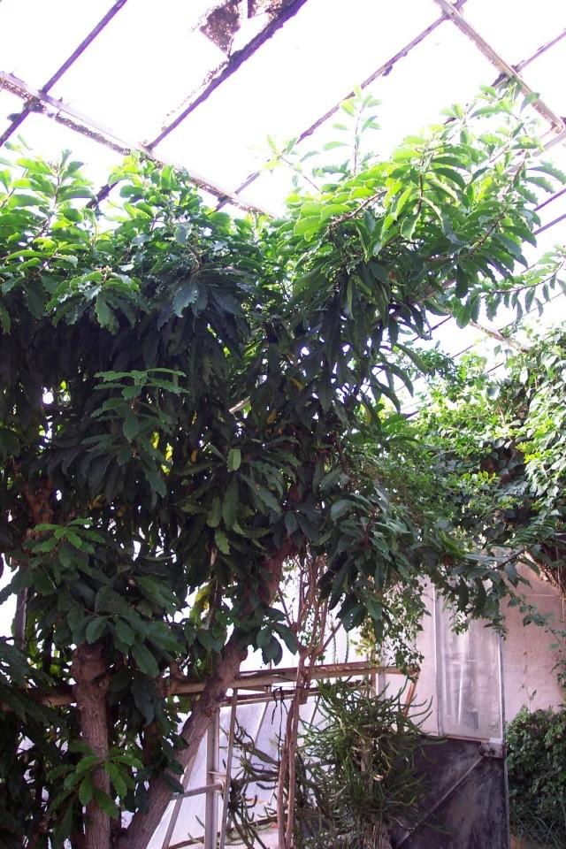 Cactus d'Aboun Chez_k10