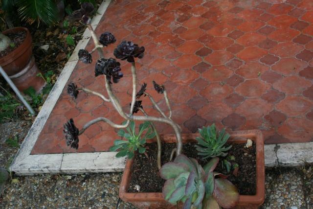 Coupes et jardinières refaites Jardin12