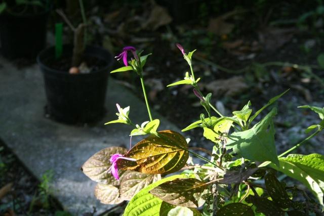 Décembre, temps très beau, plutot doux Perist11