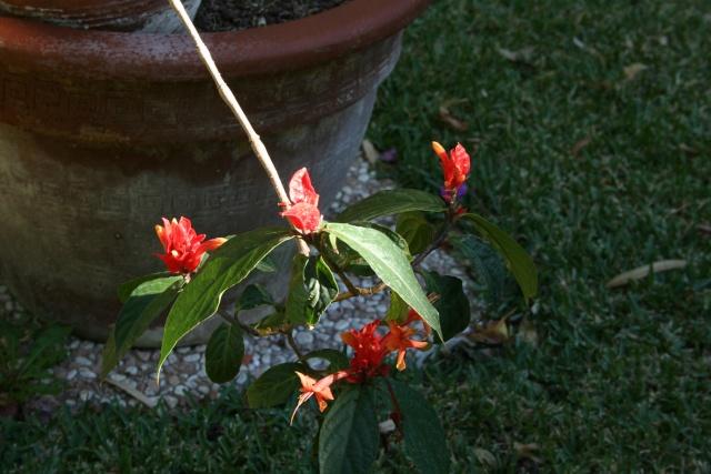 Quelques fleurs de la mi novembre Ruelli18