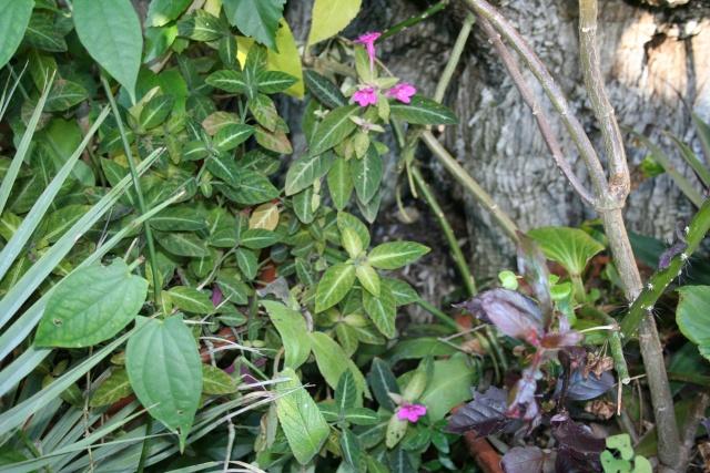 Quelques fleurs de la mi novembre Ruelli19