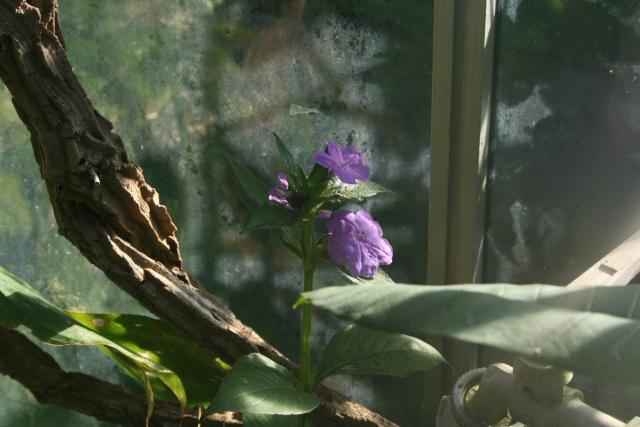 Décembre, temps très beau, plutot doux Ruelli21
