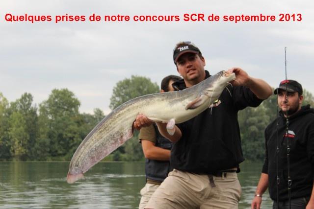 Quelques poissons du concours SCR Celine16