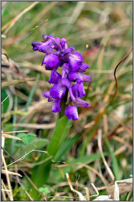 La saison des orchidées démarre Anacam11