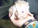 Qui a des mini hérissons?Photo de mon mini en démo P1010017