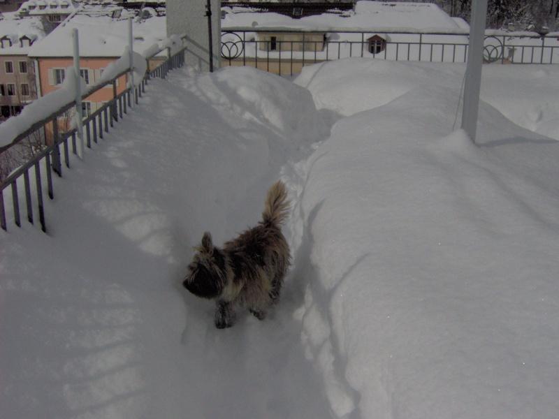 Alinka    cairn terrier - Page 2 Im000410