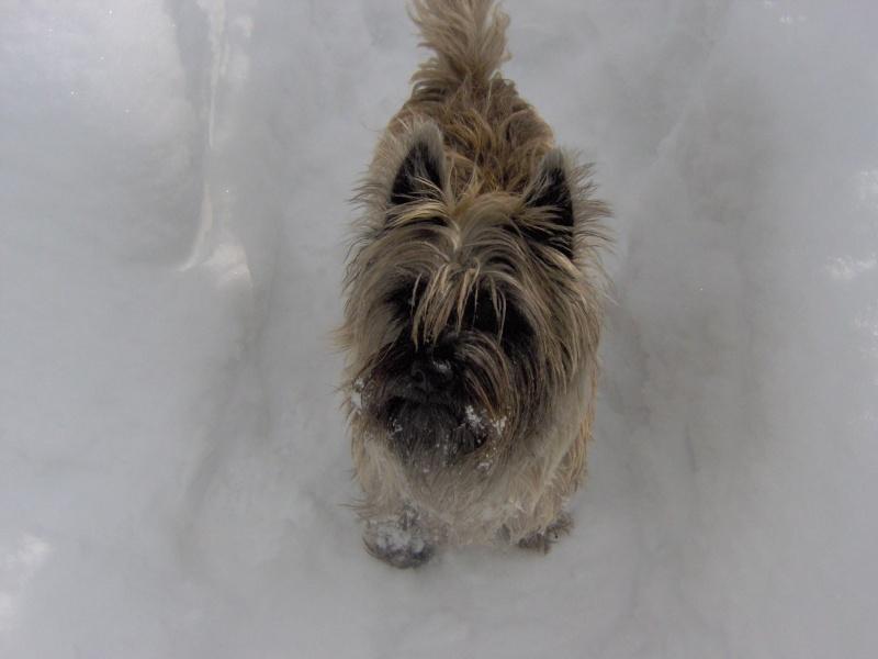 Alinka    cairn terrier - Page 2 Im000411