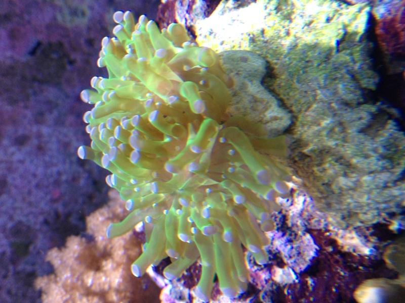 MON RED SEA 130 Image12